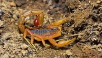 Brasil registrou 140 mil ataques de escorpião
