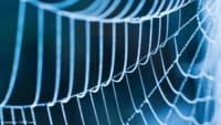 Teia de aranha pode reconstruir tecido cardíaco