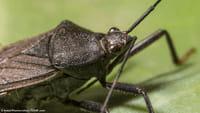 Chagas: crescem mortes na fase sem sintomas