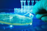 Cientistas criam esperma in vitro