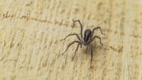 Instituto Butantan cria pomada para picada de aranha
