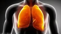 Pulmão produz plaquetas, descobrem cientistas