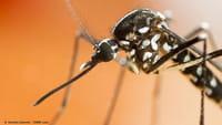Brasil registra quase 600 mil casos de dengue