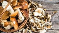 Cogumelos reduzem chances de perder a memória