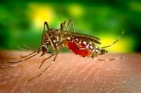 Proteína é a causa da dengue hemorrágica