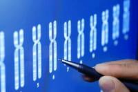 Cientistas descobrem gene do envelhecimento