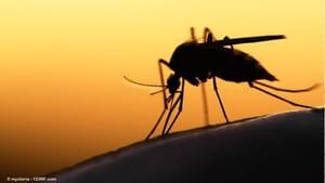 Brasil confirma segundo caso de febre do Nilo