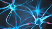 Dosagem de cálcio no cérebro inibe memória