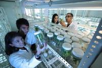 Bactérias resistentes ameaçam 10 milhões